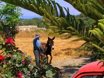 Wildlife on Kos includes donkeys. They are well cared for by their owners and loved by tourists